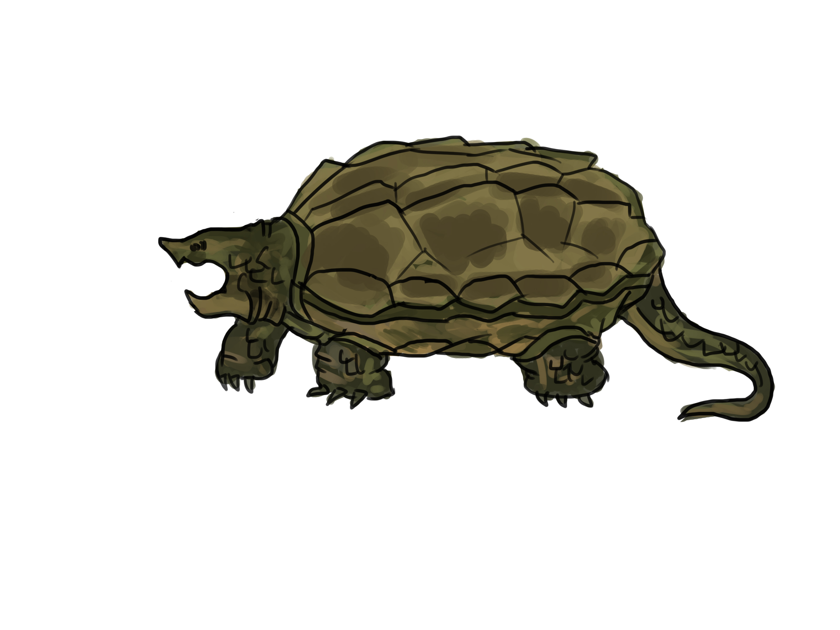 Drawn sea turtle snapping turtle Turtle Ways a to