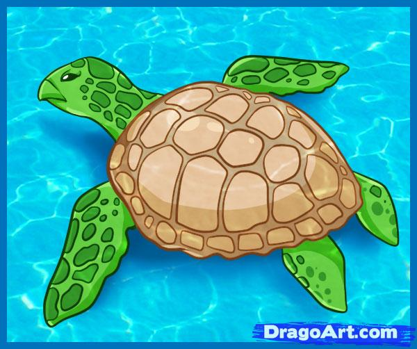 Drawn sea turtle water drawing How Turtle Sea  Sea