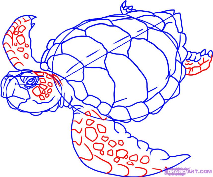 Drawn sea turtle face A turtle 5 sea Animals