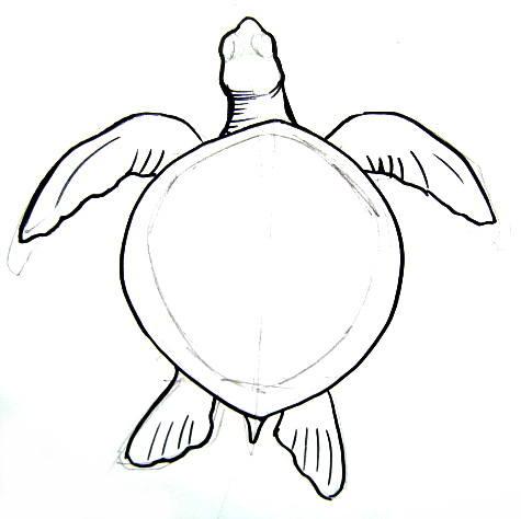 Drawn sea turtle line drawing Sea Turtle Sea to turtle