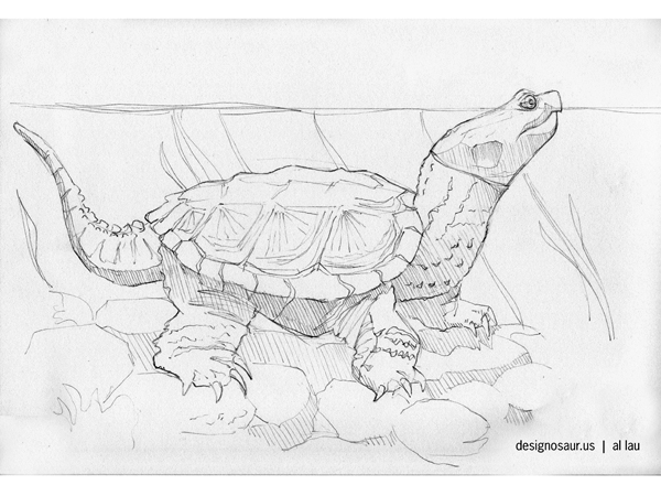 Drawn sea turtle snapping turtle Blog turtle us turtle drawing: