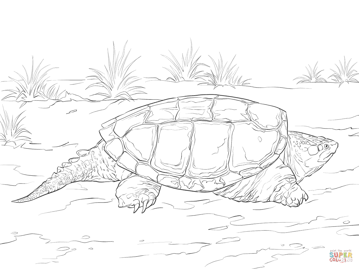 Drawn sea turtle snapping turtle Realistic Realistic  Snapping coloring