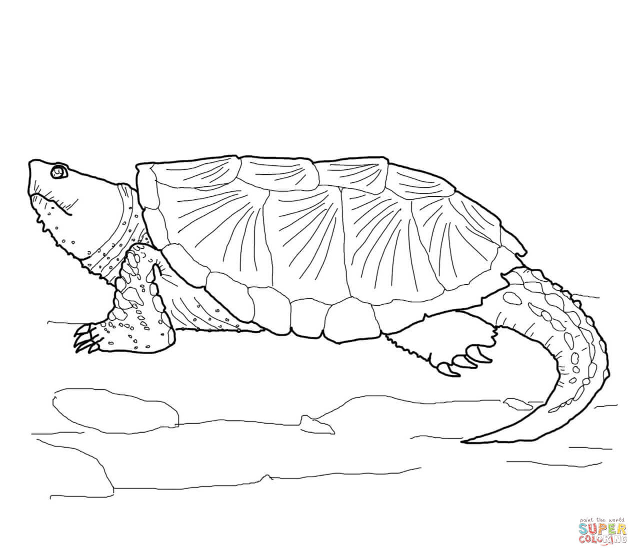 Drawn sea turtle snapping turtle Snapping Common coloring Free Pages