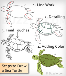 Drawn sea turtle step by step  Turtle to How Using