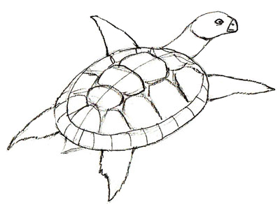 Drawn sea turtle line drawing Step to Draw Draw by