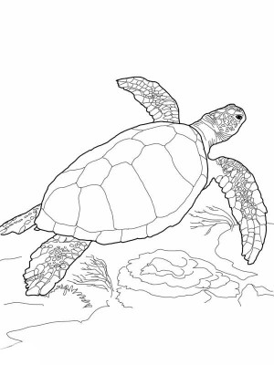 Drawn sea turtle pattern Turtle Coloring Page Cute