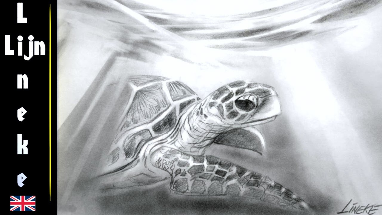 Drawn sea turtle beginner For Drawing TURTLE under SEA