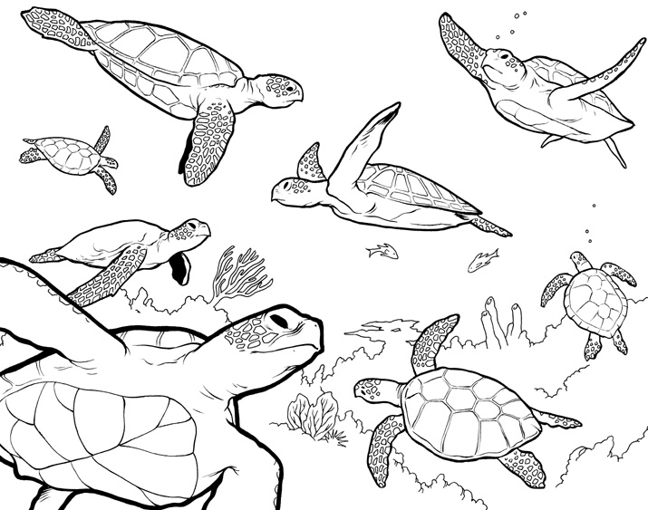 Drawn sea turtle underwate animal Creatures drawing Search  art