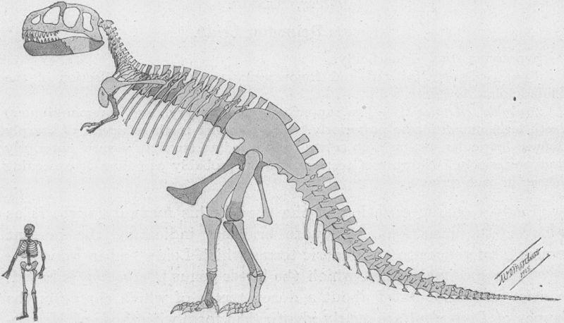 Drawn tyrannosaurus rex The showing – D it
