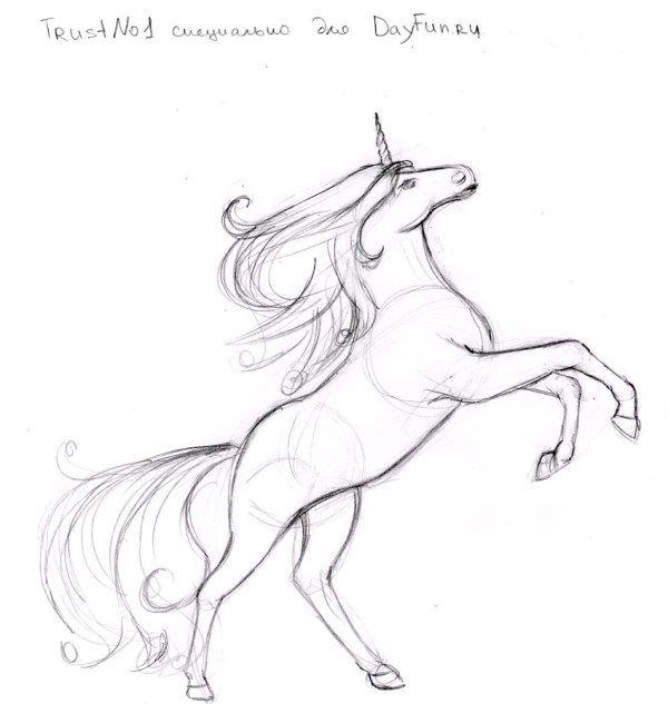 Drawn unicorn Step by a draw on