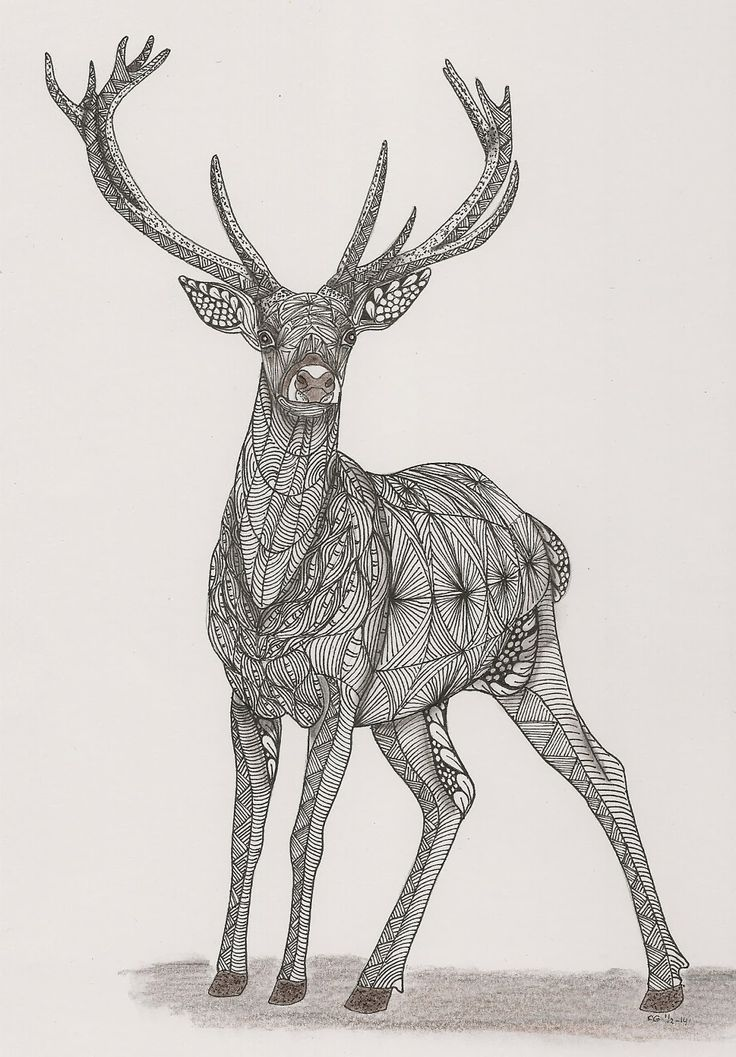 Drawn reindeer zentangle Creation ornation best DOODLE about