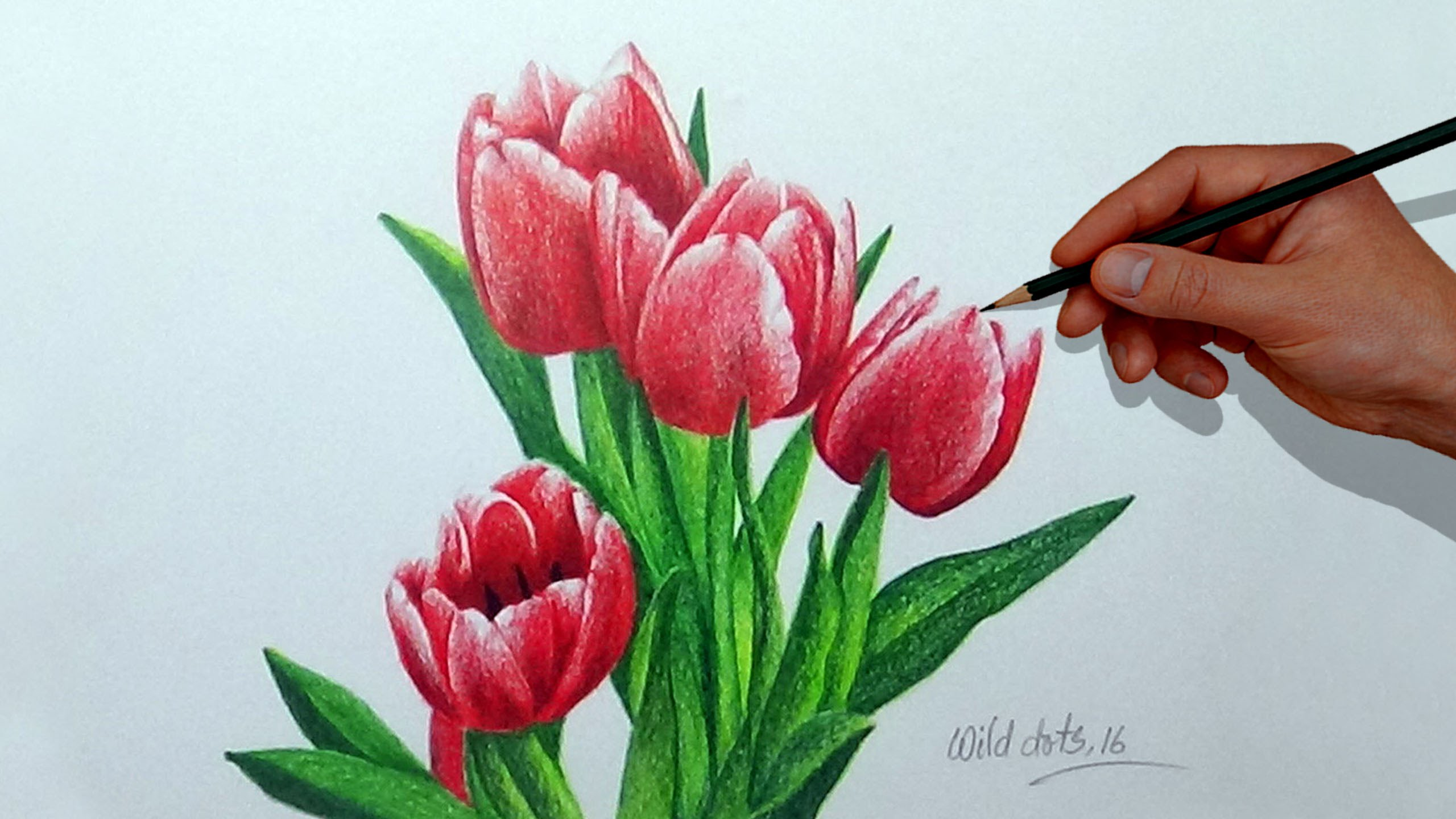 Drawn rose pencil crayon How A With A Tulip