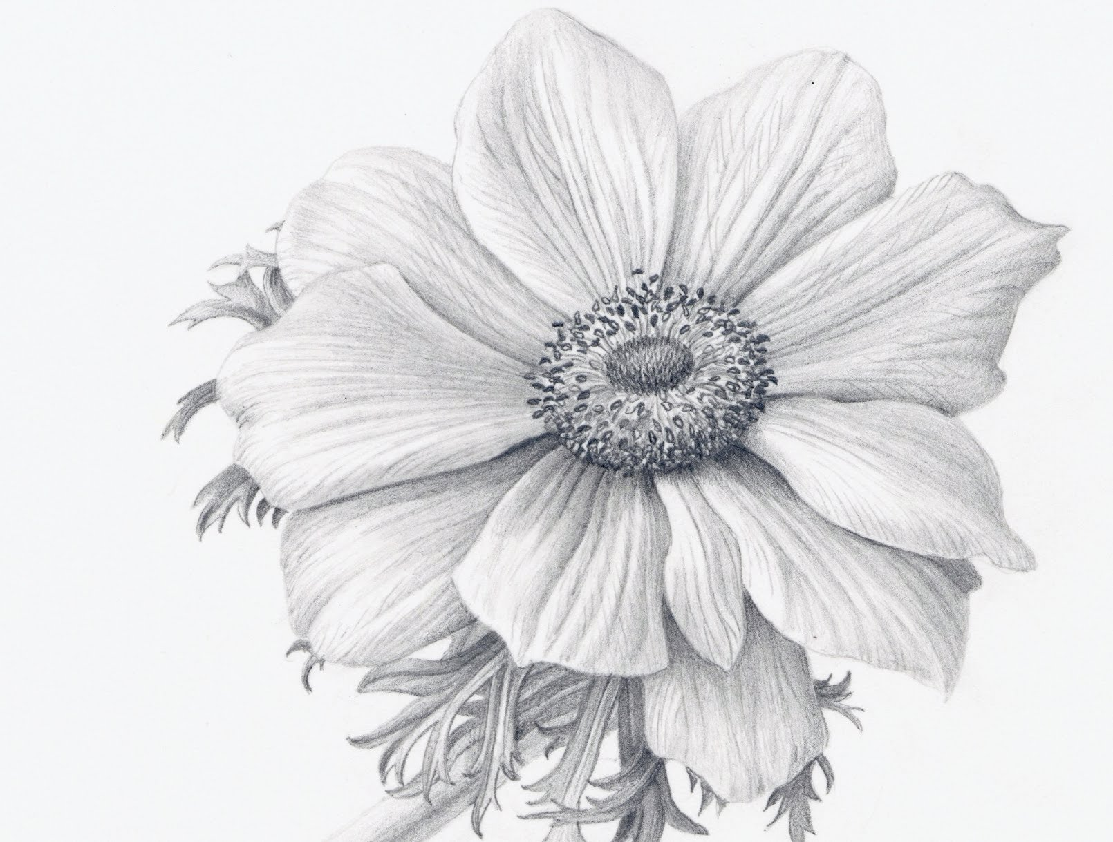 Drawn daisy realistic Flowers How Realistically  Draw