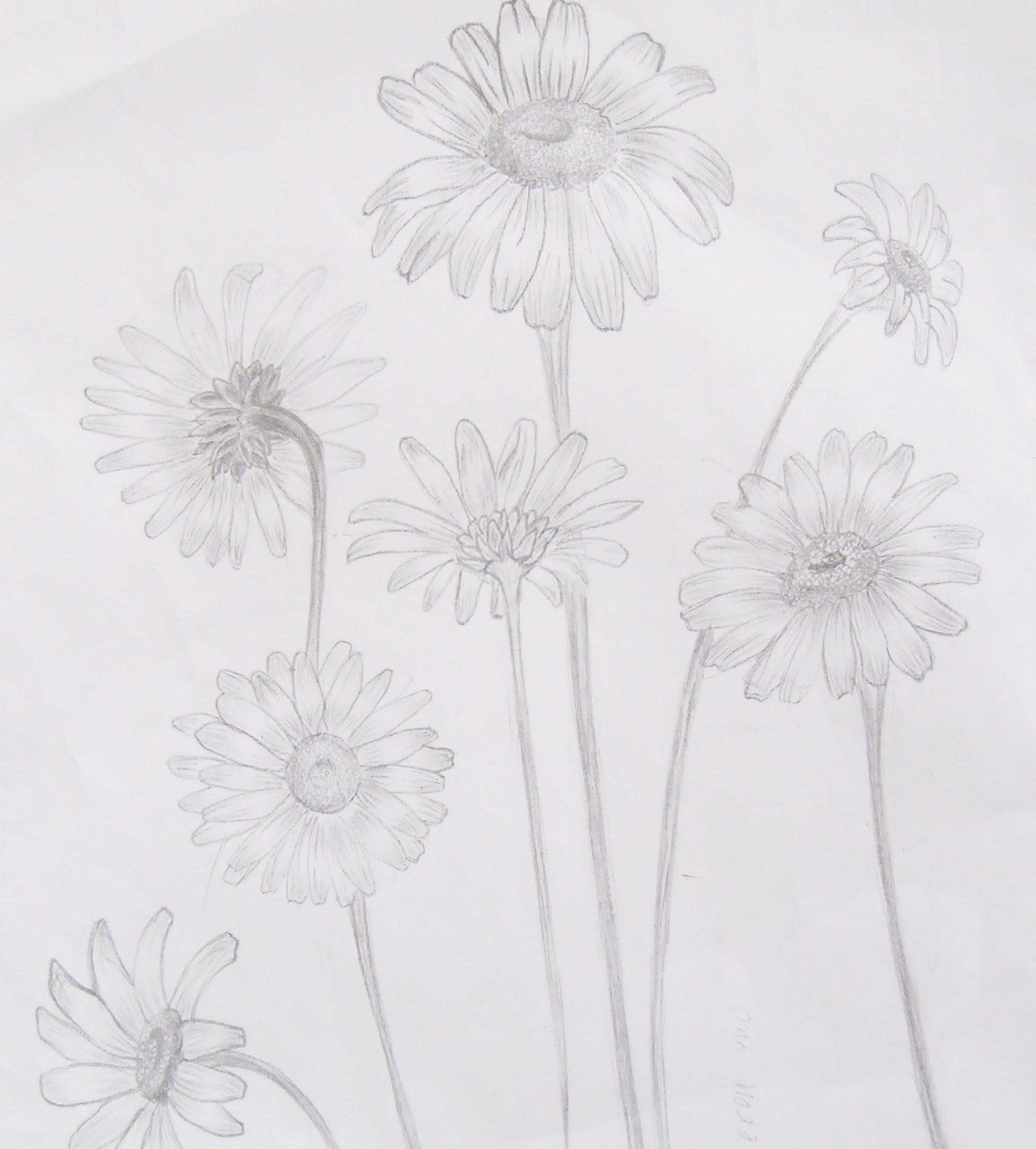 Drawn poppy realistic Lesson How lesson realistic draw