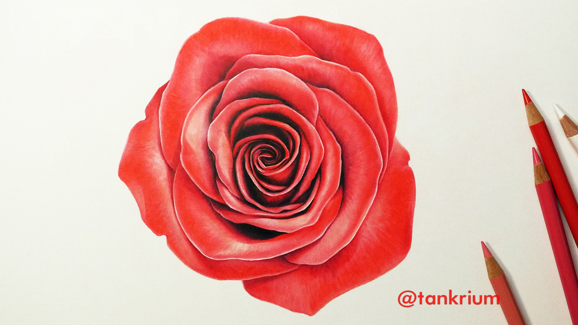 Drawn red rose sketch A Lapse To A YouTube