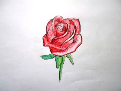 Drawn vase red rose Red Rose Drawing) Realistic a