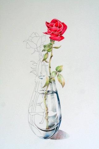 Drawn vase red rose Rose in Pencil Rose Pencil