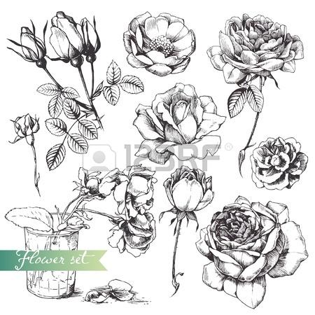Drawn vase rose > Rose Drawing  For
