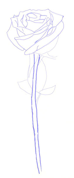 Drawn vase rose A Draw How Draw How
