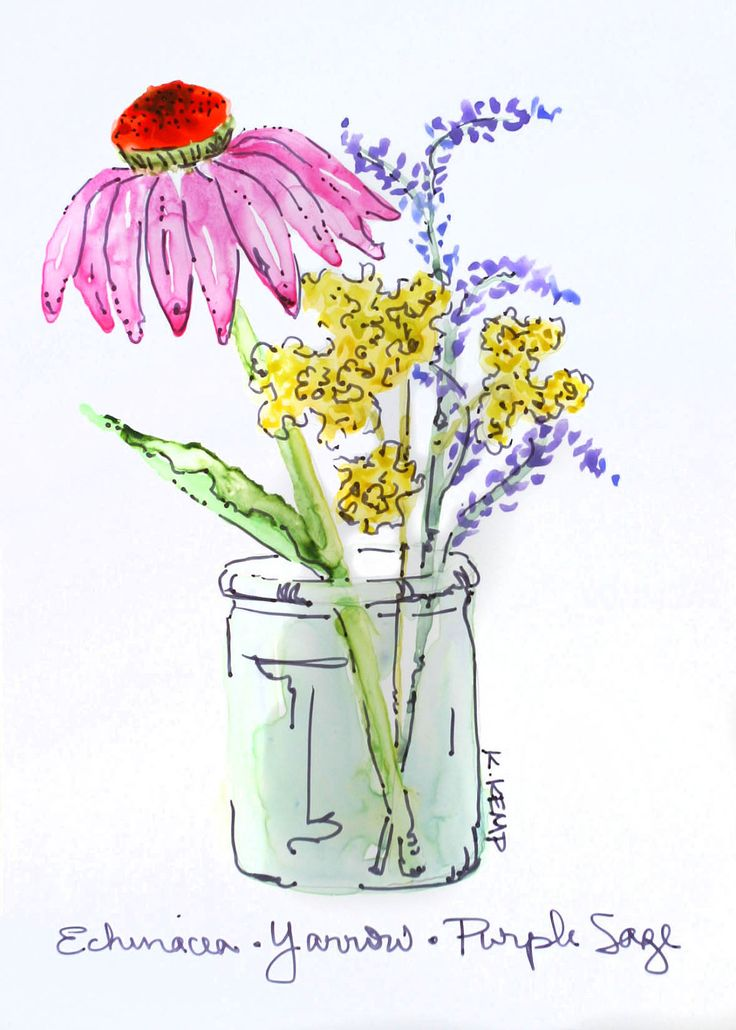 Drawn vase wash Watercolor (Echinacea) best Glass in