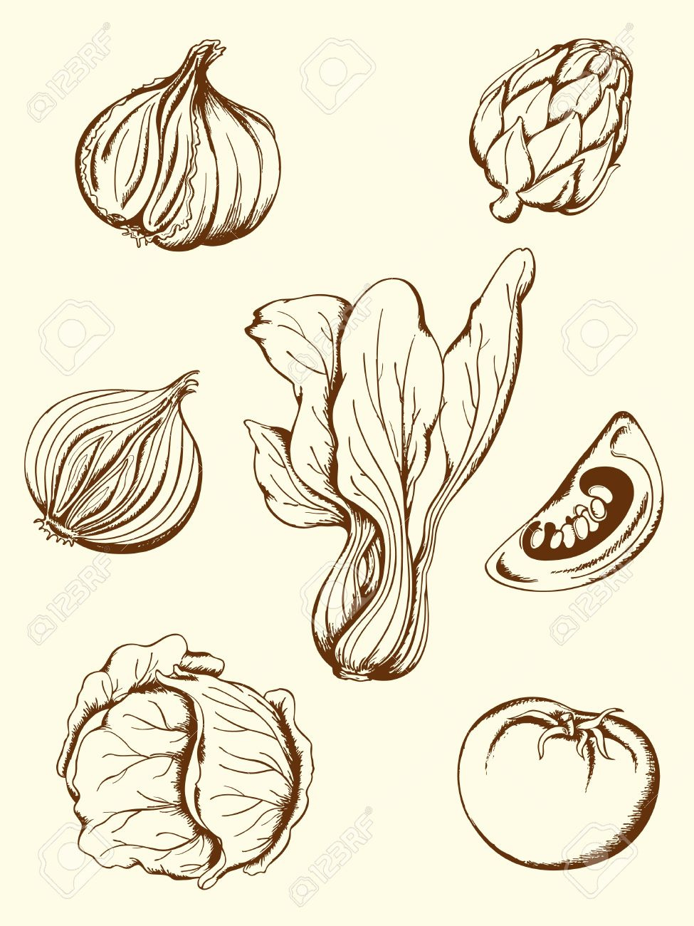 Drawn vegetable realistic Vegetable illustrations illustrations Search Search