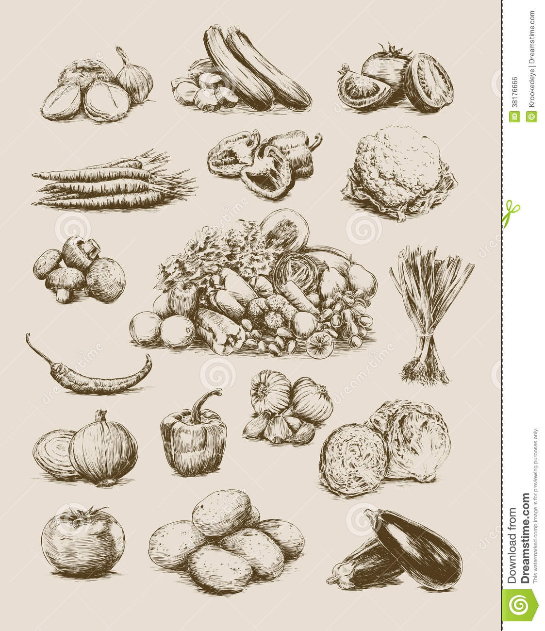 Drawn vegetable realistic Set vector drawing on Vintage