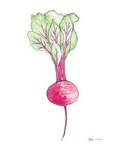 Drawn vegetables beet Art Drawing Vegetable Print Watercolor