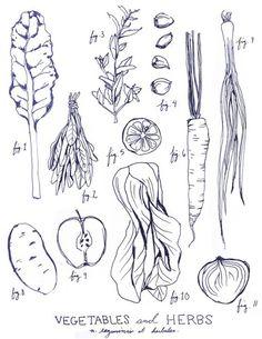 Drawn vegetable black and white  art garden graphics vintage