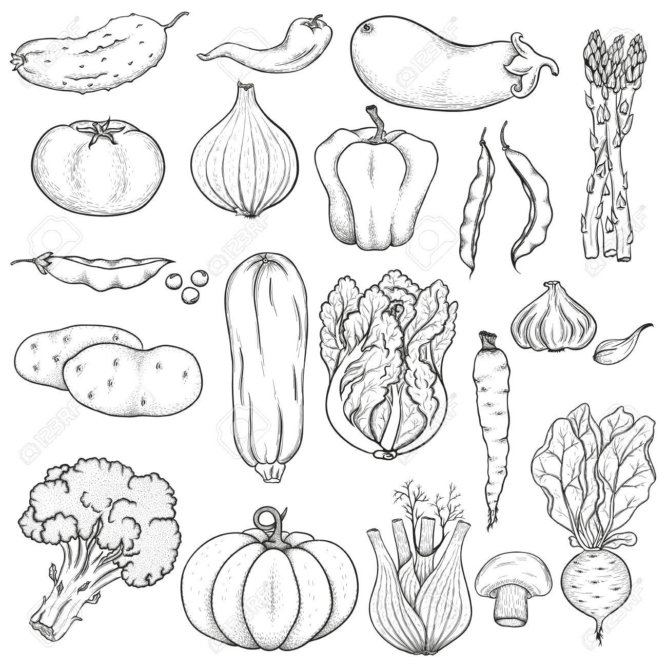 Drawn vegetable black and white White Google white black and