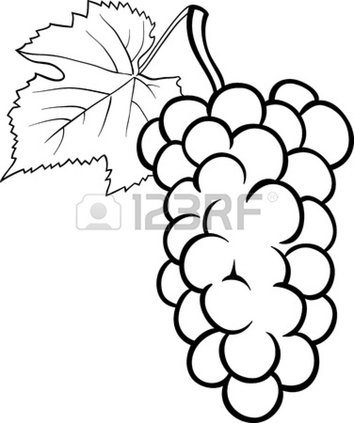 Grape clipart leafy vegetable Vegetables 2017 Fruit Hand Drawn