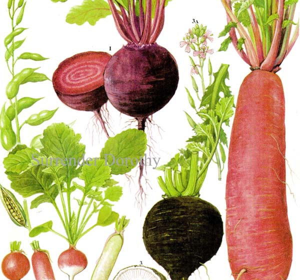 Drawn vegetables fruit and vegetable Root Vegetable this Like Chart