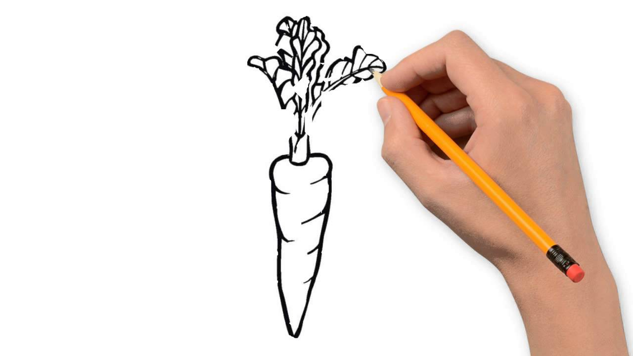 Drawn vegetables easy To step draw to step