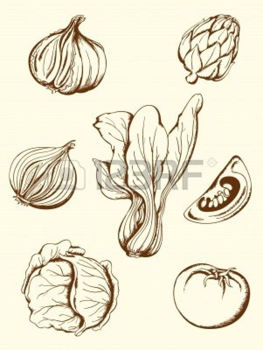 Drawn vegetables line art Hand vegetables vintage vector vector