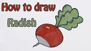 Drawn vegetable radish How a Fruit & com