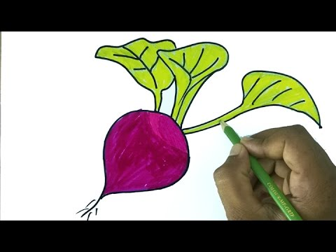 Drawn vegetable radish Easy for Drawing a Step