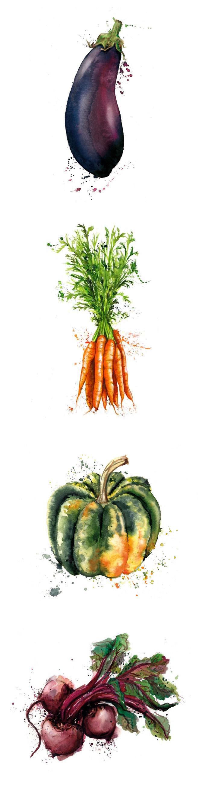 Drawn vegetable Vegetables Georgina illustrazione by illustration