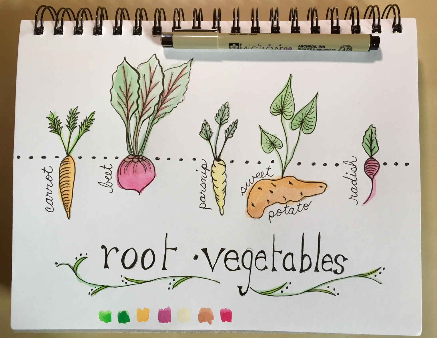 Drawn vegetable root vegetable Vegetables root Terri's vegetables sketchbook
