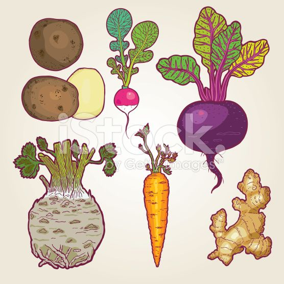 Drawn vegetable root vegetable Love images 145 art illustration