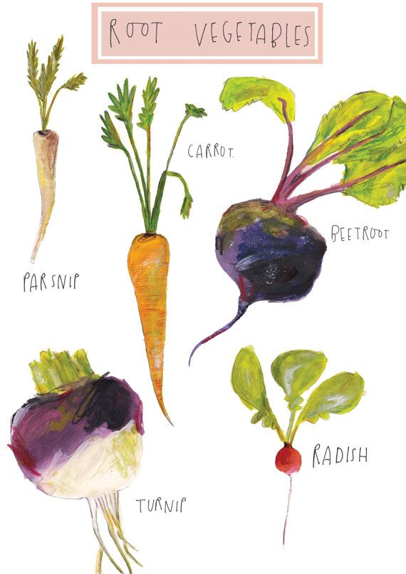 Drawn vegetable root vegetable Images vegetables 47 on by
