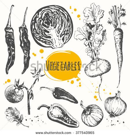 Drawn vegetable chalk Zucchini of sketch sketch mediterranean