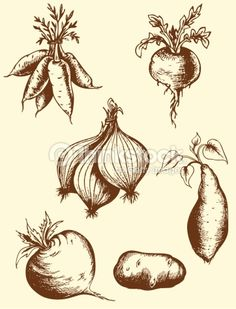 Drawn vegetable sketched Drawing line and drawings Vegetable