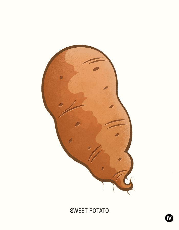 Drawn vegetable sweet potato & 30 Fruits art Potato