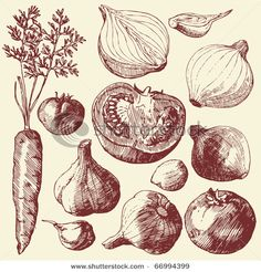 Drawn vegetable vintage Art food drawn hand hand