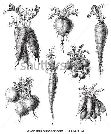 Drawn vegetable vintage & Konversations Hein Field Printable: