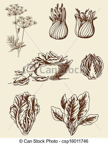 Drawn vegetable vintage Of  vegetables vector of