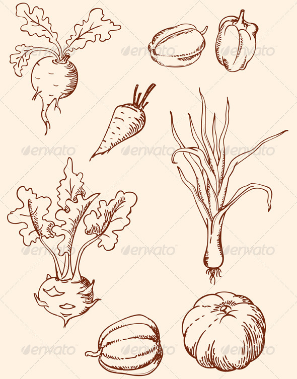 Drawn vegetable vintage Vector Vintage Hand Vegetables Drawn