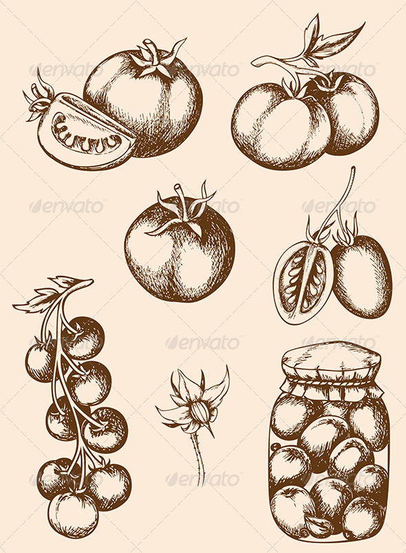 Drawn vegetable vintage And Tag design Vector Tomatoes