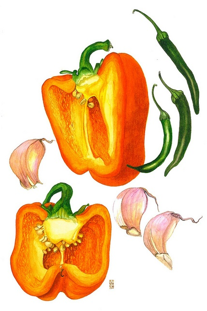 Drawn vegetable watercolor Images and Drawing Drawing Plant