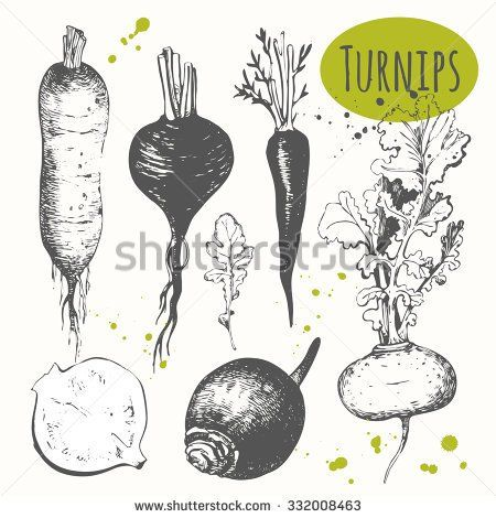 Drawn vegetables root vegetable Image best on Root images