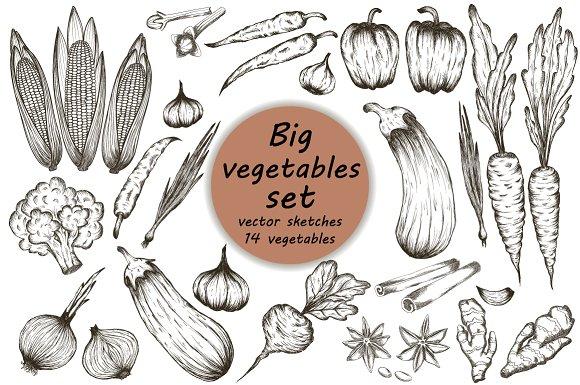 Drawn vegetables vector Drawn Market vector ~ hand